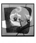 Orchidea konstrukt I. (Z. Pešánek)_2003
